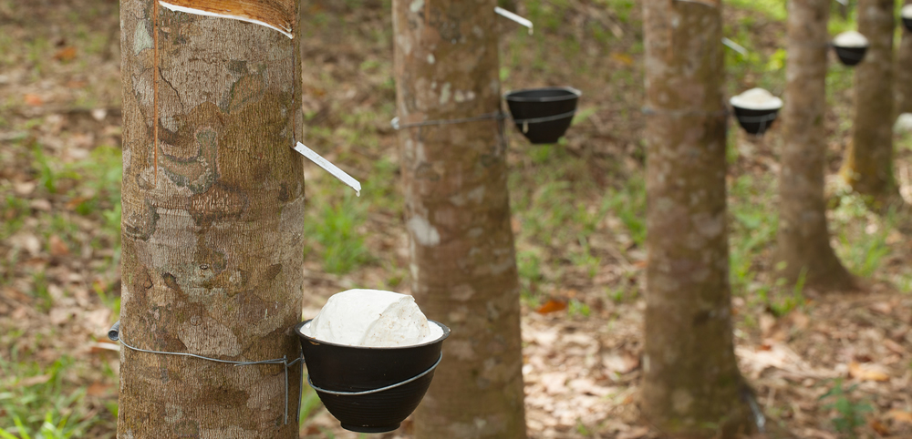 Malaysia's natural rubber production rises 16.3% in June