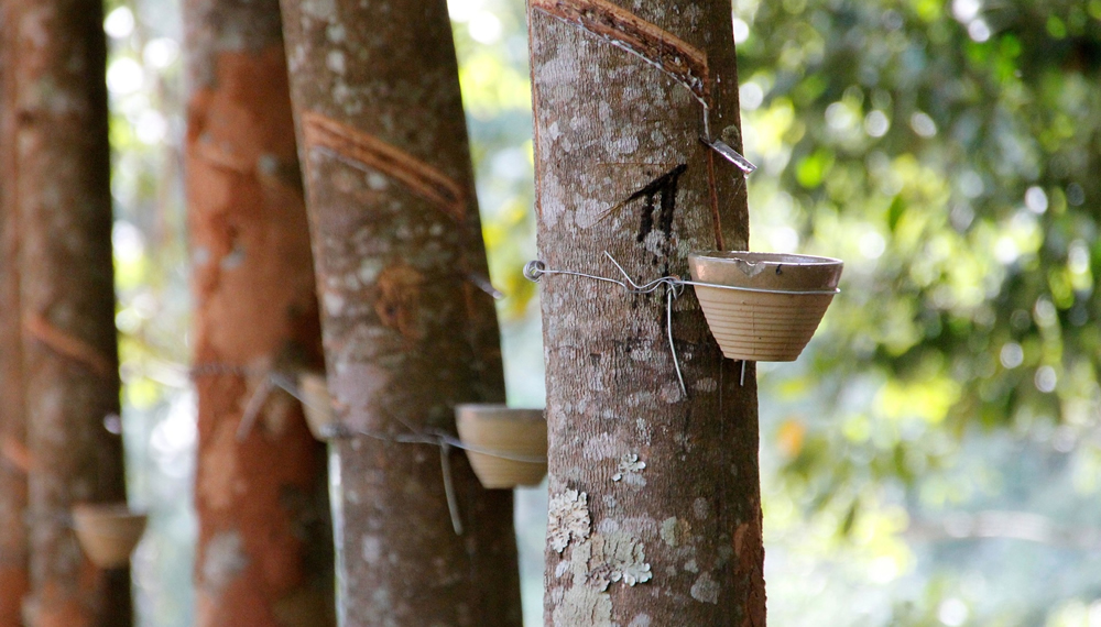 Natural rubber markets weak amid high stock levels, uncertainty