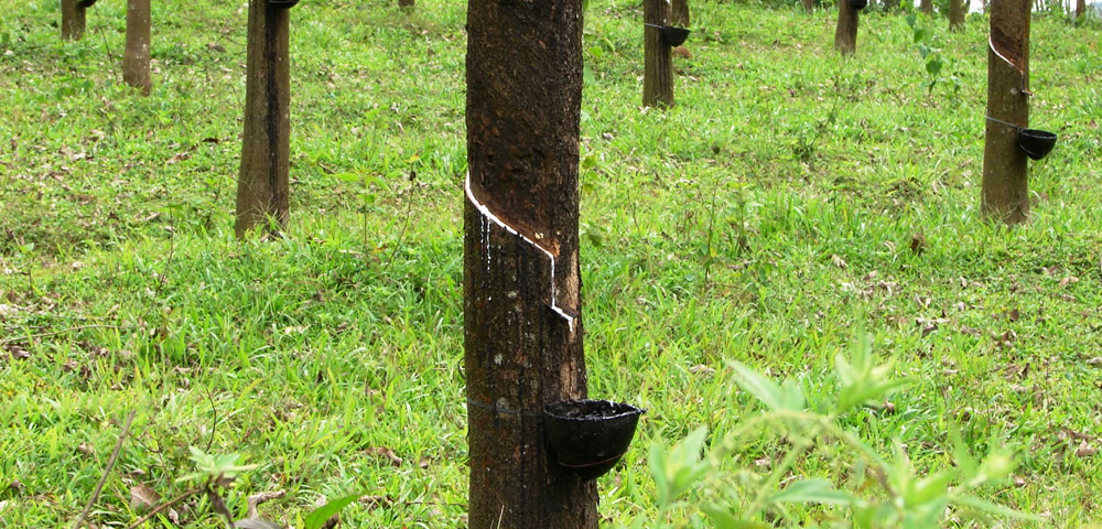 China investing in Sri Lanka's plantations, focus on rubber development