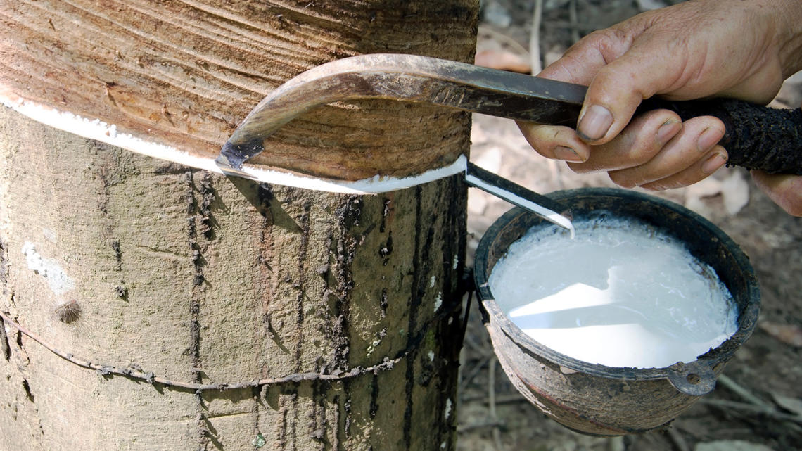 Stakeholders launch global platform for sustainable natural rubber